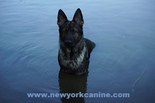Gunnar in the water (2)