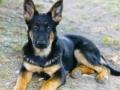 alk puppy