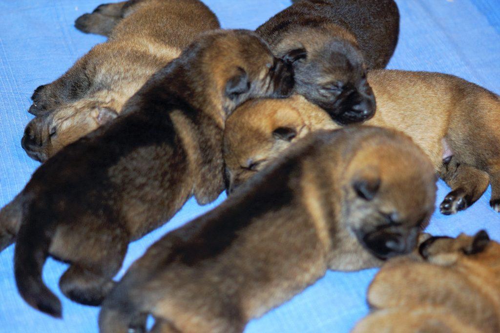 Elan's First Puppies